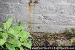Independent pre-purchase building inspections expose rising damp - image