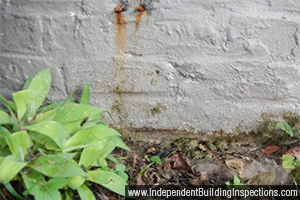 independent building inspections expose rising damp - image